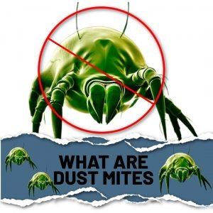 Air duct cleaning, pollen season, Dust Mites