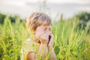 sneezes because of an allergy to ragweed