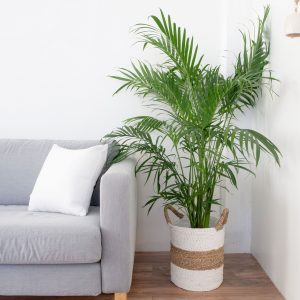 Indoor House Plants For Better Breathing